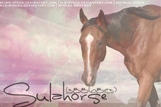 Sulahorse Card by hls-mircea