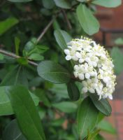 white flower 03 by CotyStock