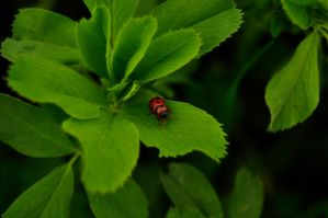 red bug by Lk-Photography