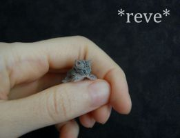 Tabby Kitten Handmade Miniature Sculpture by ReveMiniatures