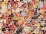 Autumn Leaves 1 by 11katie22