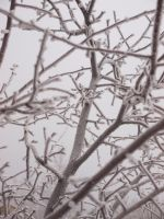 frozen frosty branches by fotophi