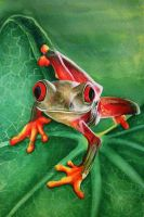 Frank The Frog - Its a froggy day) by theresa carr by DesignbyTheresaCarr3