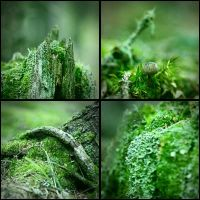 Green is the forrest by rainman65