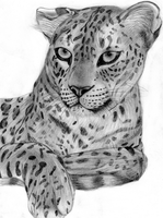 Leopard by Takas15