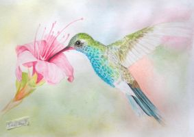 Hummingbird -Watercolor- by Sawakura