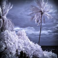 Palm Beach infrared by MichiLauke