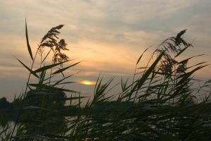 Reeds evening song by steppeland
