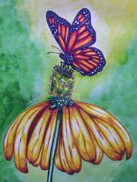 Butterfly and Flower by NewfieArtGirl