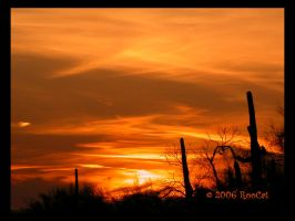Paint It Orange Spring Sunset by RooCat
