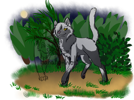SoftPaw: Night Time Forest by Hanako-Wolf