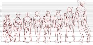 Height + Anatomy chart, WIP by Waspino
