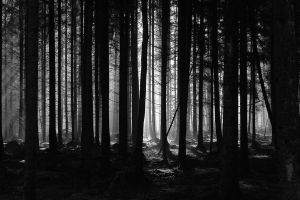 dark forest by JackFlubber
