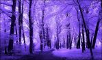 Purple Trees Infrared... by MichiLauke