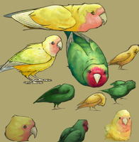 Lovebird Sketches by aireona93