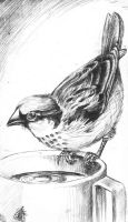 Sparrow, dry point technique by Velouriah