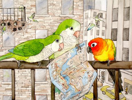 Parrot asking for directions by greencheek