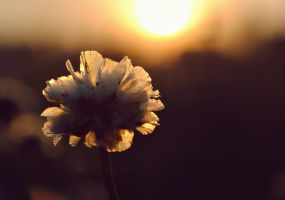 Chasing the Sun by SunnySpring