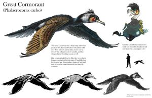 Great Cormorant Sheet by Tikall