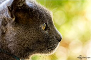 Watching the World Go By by ILTBY
