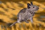 Degu on grass by Kayleigh-Kaz
