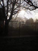 Morning Myst In Our Garden by llallogan