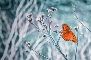 Butterfly by JFroi
