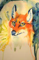 Red Fox Star Sky and Plants Watercolor by Butterfly-Kitsune
