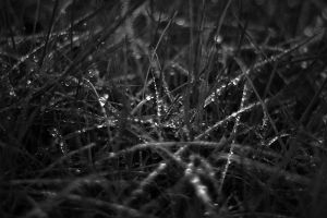 The Morning Dew by ketoo
