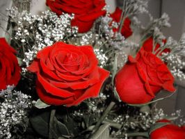 Red Roses by JazzyPhoto
