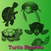 Turtle Brushes by remygraphics
