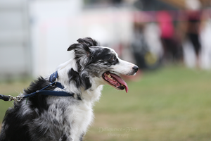 Happy Dog Agility IV by Deliquesce-Flux