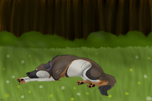 Sleeping on the meadow by Kundlica