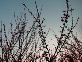 JAPAN STOCK FLOWER PLANT NO:040030110 by hirolus