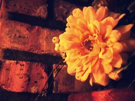 Yellow Beauty. by leannlaughlove