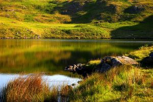 Green Summer by scotto