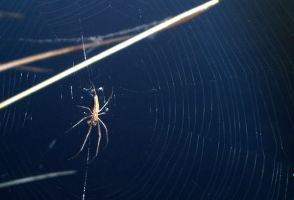 i hate spiders by twigg21