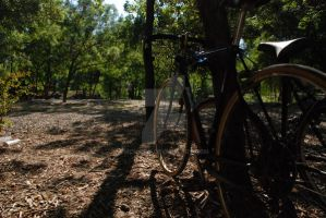 The Bike Near the Tree by Mcnicky