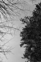 overhead series trees by GreenSlOw