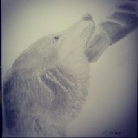 True love of a wolf by Carlitos-Girl