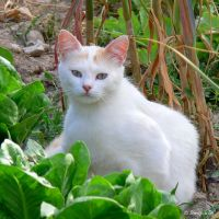 White vegetarian cat xD by Jorapache