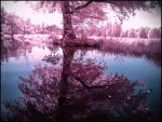 Summer in September VII infrared by MichiLauke