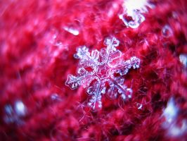 Snowflake on my Glove by Krisztinaaa