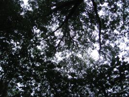 Tree tops 3 by frisbystock