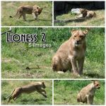 Lioness 2 by MalunkeyDaStock