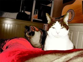 Tinka and Happy by Where-is-my-cat