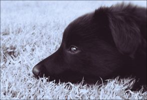 Athos as a puppy by chipset