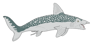 Helicoprion sp. by WSnyder