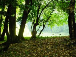 green forest by spidergypsy