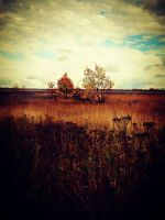 fall is here by Lorah